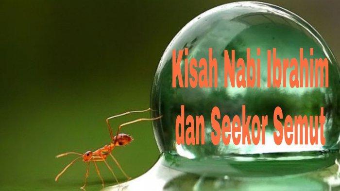 BIKIN TERHARU, Kisah Nabi Ibrahim dan Seekor Semut Cuma Punya Setetes Air