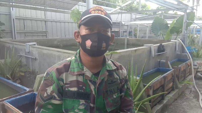 SOSOK Serda Ahmad Junaidi, Personel TNI AD Kodim 0208 Asahan,Sukses Membudidayakan Benih Ikan Gurami