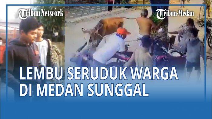 VIRAL Video Detik-detik Sapi Mengamuk dan Seruduk Warga di Medan