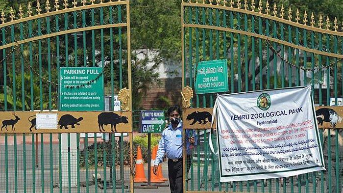 Delapan ekor singa di kebun binatang Nehru Zoological Park, India, positif Covid-19.
