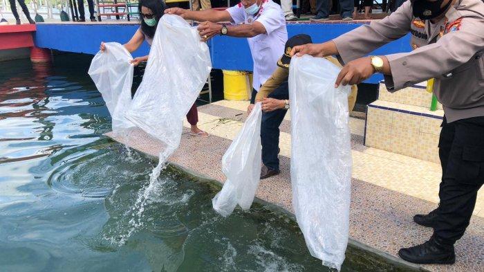KMDT Taburkan Benih Ikan 100 Ribu Ekor di Perairan Danau Toba