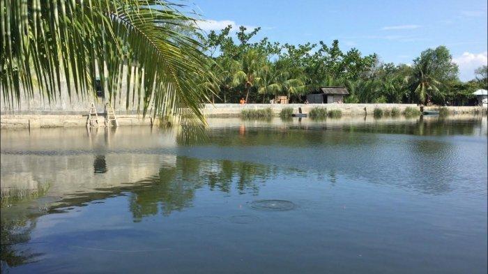 Nasib Petambak Ikan di Percutseituan Akibat Pandemi Covid-19