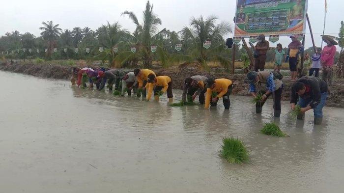Kesultanan Asahan Serahkan 1000 Hektare Tanah untuk Dikelola  Kelompok Tani.