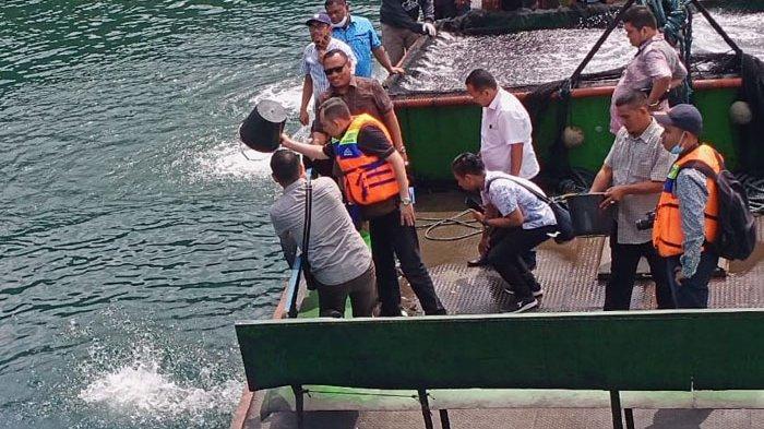 Regal Springs Indonesia Tebar 100 Ribu Benih Ikan Tilapia di Danau Toba