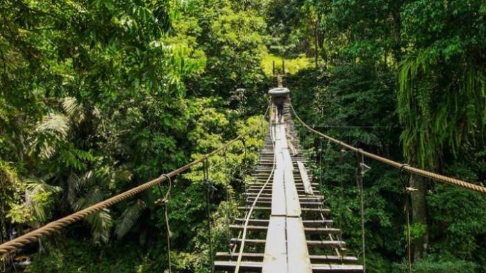 Titi Gantung Nini Galang, di kawasan Ekowisata Penangkaran Gajah Tangkahan, Dusun Kwalabuluh, Desa Namosialang, Kecamatan Batangserangan, Kabupaten Langkat.