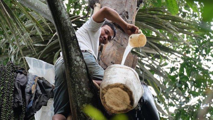 Petani mengumpulkan nira hasil sadapan yang diracik menjadi tuak