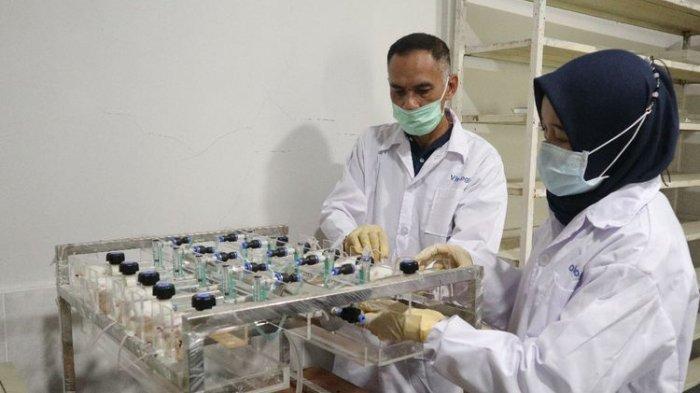 Formula eucalyptus diuji secara in vitro, di dalam laboratorium.