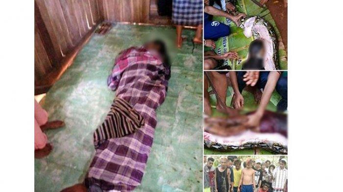 Kronologi Piton 7 Meter Mangsa Wanita 54 Tahun: Perut Ular Dibelah Tampak Jasad Korban
