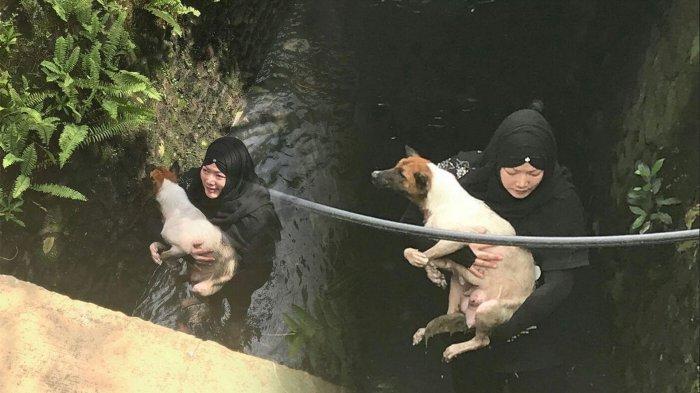 Hukum Pelihara Anjing dalam Islam, Simak Ceramah Ustaz Kondang Abdul Somad Ini