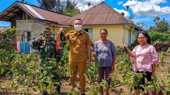 Antisipasi Krisis Pangan, Wabup Dairi Ajak Warganya Berkebun di Pekarangan Rumah