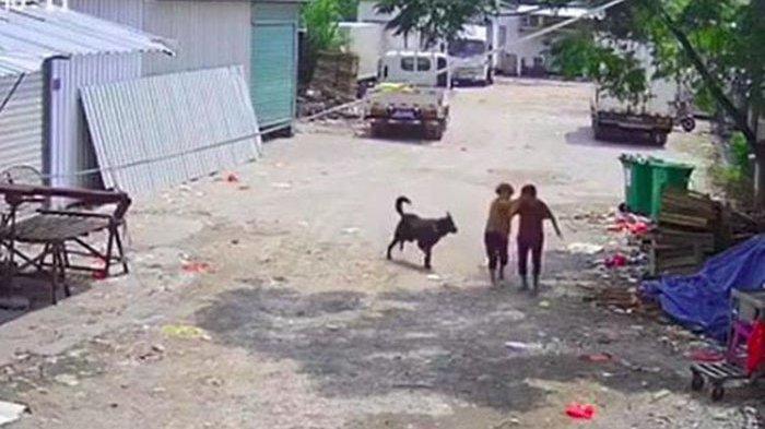 Wanita 71 Tahun Diseret dan Digigit Anjing Ganas, Tindakan Sopir Truk Ini Picu Kemarahan