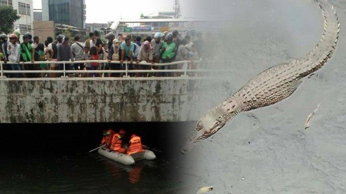 Warga Dihebohkan Keberadaan Seekor Buaya di Sungai, Lihat Videonya. .