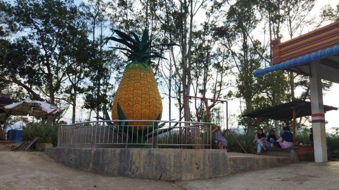Parhonasan, Lokasi Wisata di Dairi yang Tawarkan Kelezatan Buah Nanasnya