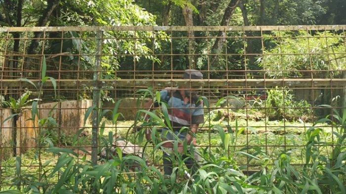 Sempat Terkendala Soal Upah, Kini Pekerja di Medan Zoo Sudah Terima Upah hingga 80 Persen