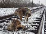 anjing_dari_ukraina_20161230_190140.jpg