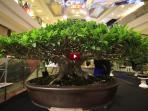 bonsai-nikson_20150726_211830.jpg