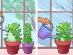 cara-merawat-tanaman-hias.jpg