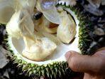daftar-lokasi-kuliner-durian-di-medan-selain-ucok-durian.jpg