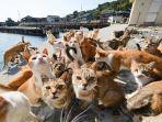 destinasi-wisata-buat-pecinta-kucing.jpg