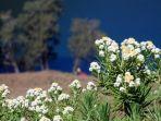 dilarang-dipetik-saat-mendaki-gunung-ini-12-fakta-bunga-edelweis-yang-harus-kamu-ketahui.jpg
