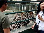 dokter-fany-berfoto-bersama-zebra-di-taman-hewan-siantar_20171009_174541.jpg