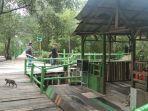 ekowisata-mangrove-di-kelurahan-belawan-sicanang.jpg