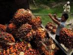 foto-ilustrasi-panen-kelapa-sawit.jpg