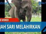 gajah-sari.jpg