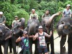 gajah-sumatera-konser.jpg