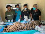 harimau-sumatera-2.jpg