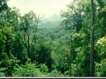 hutan.jpg