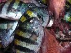 ikan-mati-massal-di-pantai-falajawa-ternate.jpg