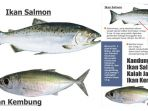 ikan-salmon-vs-ikan-kembung_20181006_144011.jpg