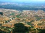 ilustrasi-hutan-indonesia-tribun-medan-com.jpg