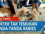 kasus-bocah-digigit-anjing-dokter-sebut-tak-temukan-tanda-tanda-rabies-qq.jpg