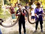 king-cobra-super-panjang-6-meter.jpg