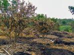 kondisi-ladang-jeruk-terbakar-milik-seorang-petani-di-desa-sungai-raya.jpg