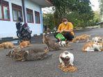 kucing_telantar_kampus_usu.jpg