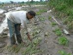 lahan-pertanian-rusak-akibat-lahar-dingin.jpg