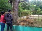 medan-zoo-penyertaan-modal.jpg
