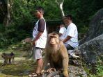 monkey-forest.jpg