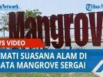 nikmati-suasana-alam-di-wisata-mangrove-sergai-tawarkan-paket-edukasi-penanaman-mangrove.jpg