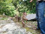 parapat-monkey-forest2.jpg