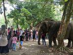 pengunjung-medan-zoo-lihat-gajah.jpg