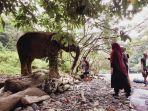 pengunjung-memberi-makanan-gajah.jpg