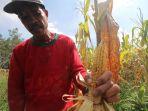 petani-jagung_20180221_194017.jpg