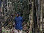 pohon-hariara-milik-marga-samosir.jpg
