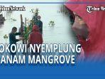 presiden-jokowi-nyemplung-tanam-mangrove.jpg