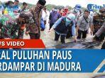 puluhan-ikan-paus-terdampar-di-pesisir-desa-pangpajung-kecamatan-modung-kabupaten-bangkalan.jpg