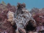 seekor-gurita-di-octlantis_20181011_101622.jpg
